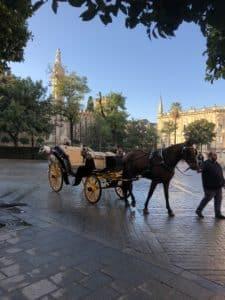 Hevosi ja kärryjä joilla turistiajelua oli paljon